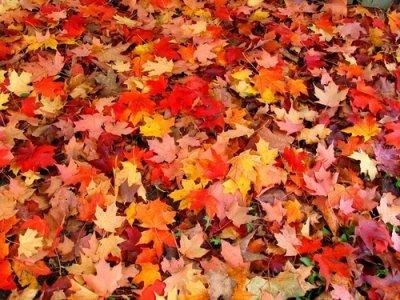 Ao anoitecer do outono