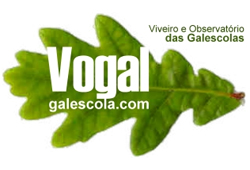 VOGAL / Galescolas